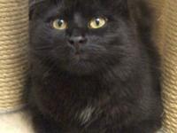 Hi there, I'm Bashi! I'm a handsome black catolescent