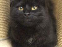 Hi there, I'm Bashi! I'm a handsome black catolescent