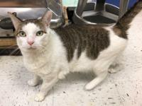SLICK RICK is a sweet and affectionate 2 year old male