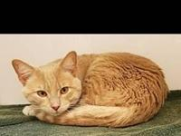 Slim's story Slim is an adorable boy who would love a