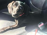 Slinky's story Slinky is a 5 month old doxie, spayed,