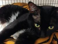 Sly, Neutered male adult 1-2 years old  Current on