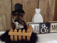 Small AKC male yorkie, charting 4# at adult weight. DOB