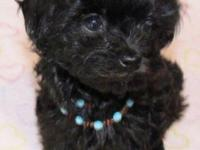 I have these cute poodle Maltese pupps small cute and