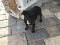Very sweet, mellow puppy looking for a forever home.