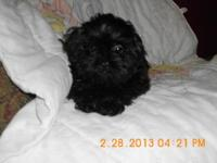 I have 1 little blk boy that is 14 wks old he will be