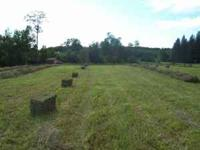 Small Square bales of Orchard and alfalfa mix for sale