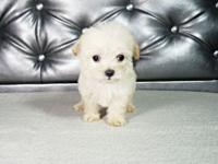 I have 1 Female and 3 Male Maltipoo puppies available.