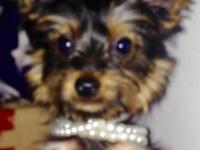 Must Rehome my yorkie puppy. She is 5 months old born