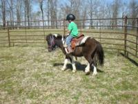 Cute 4 year old paint pony for sale. He can be ridden