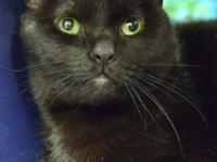 Smalls is a good-looking 8-year-old boy who was brought