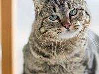 Smarty Pants's story This friendly kitty is ready to