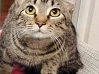 Smitty's story Meet Smitty! He is a sweet brown tabby.