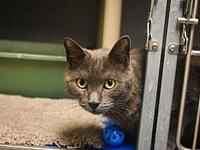 Smokey aka Maize's story All available cats are spayed