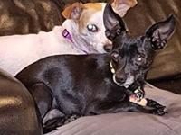 Smokey's story Meet Wifey and Smokey! They are a