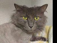 Smokey's story Primary Color: Grey Secondary Color: