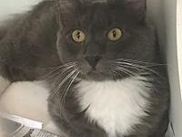 Smokey's story Meet this handsome fella named Smokey!