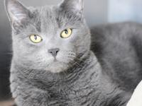My name is Smokey.  I was surrendered to the shelter