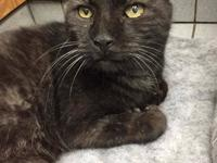 Smokey is a friendly, chatty 4 year old cat who was