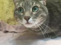 Smokey's story Smokey is a beautiful girl in search of