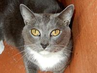 Smokey's story Smokey is a cool cat, loves to relax and