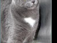 SMOKEY's story $97.50 FEE INCLUDES: neutering/spaying,