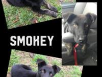 Meet Smokey! He is very a playful approximately 5-6