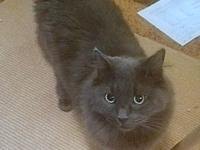 SMOKEY - Offered by Owner - Senior's story   My
