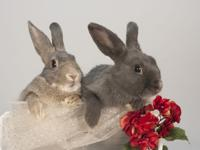 Smokey and Sapphire are available as a bonded pair.
