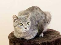 Smokie's story Smokie is one very laid back cat. She's