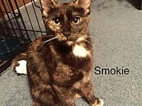 Smokie's story Pretty Smokie has weaned her kittens and