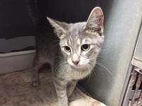 Smokie's story Playful, outgoing and friendly. Loves to