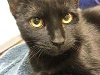 Smokie's story Hi my name is Smokie! I was brought in