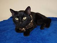 Smudge's story Smudge is a female Domestic Shorthair