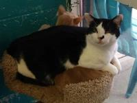 Smudge's story Smudge Male (neutered) Domestic