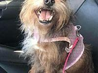 Snaggles's story Snaggles is a 5-6 year old yorkie mix.