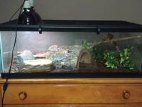 40 gallon snake tank. Comes with 3 medium sized fake