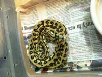 I have a group of snakes that need good homes. If