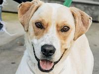 Snare's story Meet Snare, a 2 year old, 38 pound,