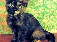 Snickers's story Snickers is a female Tortoiseshell