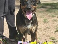 Snickers's story Snickers is a 2-3 year old, female,