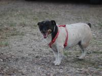 Hi, Sniff here. I am a 6 years old female Jack Russell