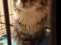 Sniffles's story Hi, my name is Sniffles. I am a male