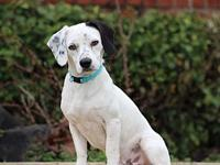 Snoopy - Adoption Pending's story Hi, I'm Snoopy! I am