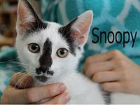 Snoopy's story The adoption fee is $85.00 with an