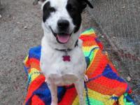 Fun loving Snoopy is waiting to meet you! Walks,