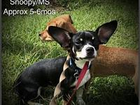Snoopy/MS's story Please complete our application at: