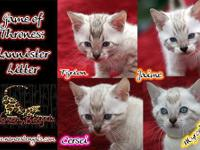 Pricing is for pet only. Breeders inquire. These babies