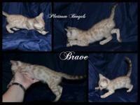We have two snow boys available: Brave - Seal Mink