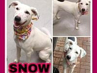 Snow's story FOSTER HOME URGENTLY NEEDED! Snow is 10